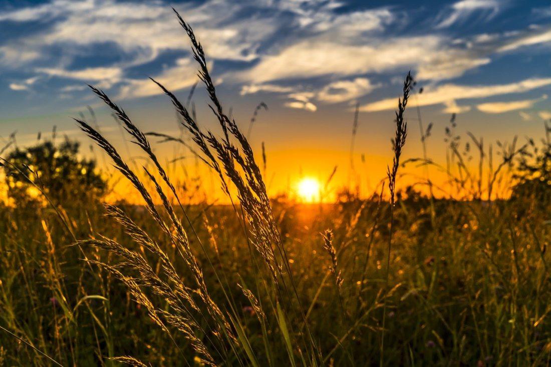 Sommer, Foto: Felix Mittermeier, Pixabay